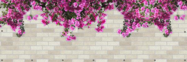 Bugenwilla - Osłona kwiaty na balkon