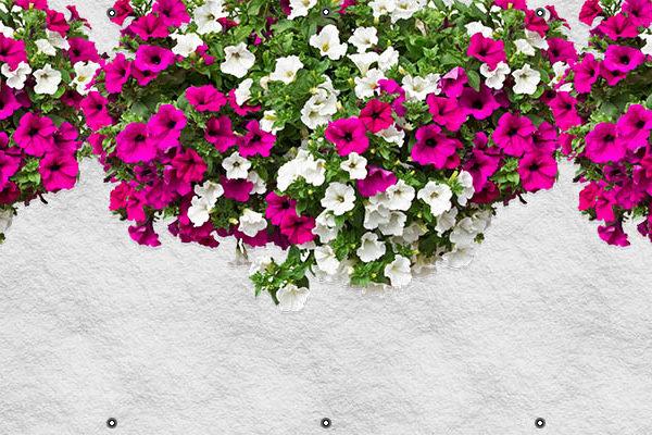 Surfinie - Osłona balkonowa