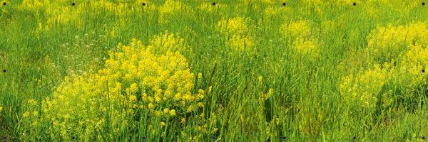 Trawy na łące - Osłona na balustradę