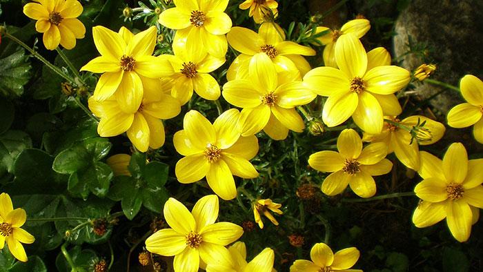 Kwiaty Na Balkon Zwisajace I Zielone Rosliny Liscie Mata Pl