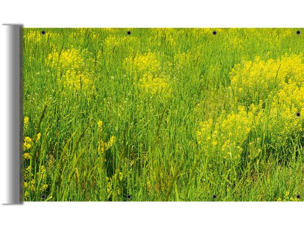 Zielona, trawiasta łąka