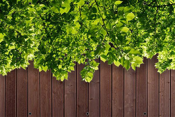 Zielone liście na deskach