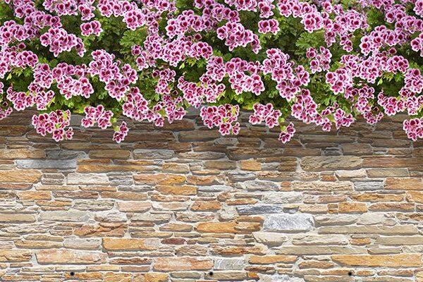 Kwiaty na kamiennej ścianie