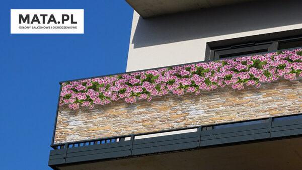Pelargonia angielska - Osłona na balkon i taras