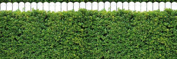 Zielone ogrodzenie - Osłona na balkon i płot